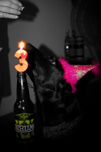 The Power of THREE! Another Year at the Dogs ofBeer