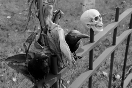 Crows and Skulls