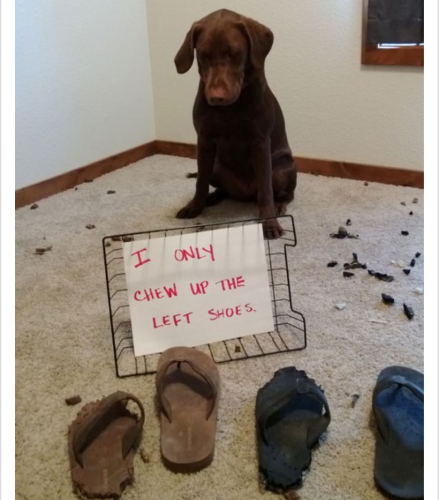 left shoes